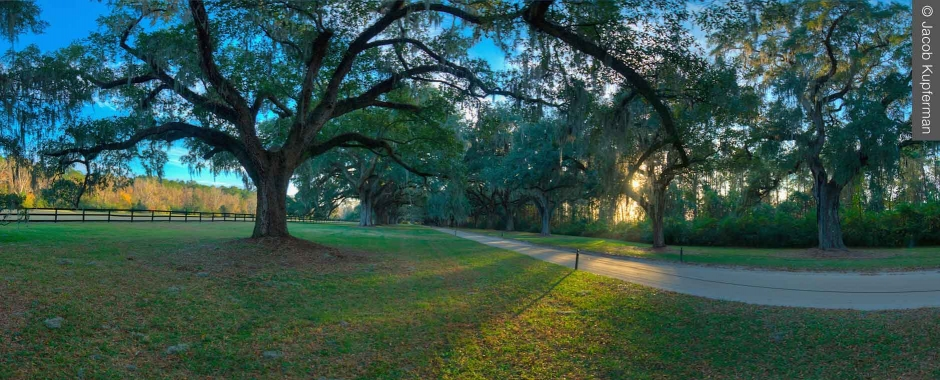 SC Sports Medicine - Low Country Trees - © Jacob Kupferman